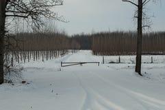 Wejście w las w Serbia podczas zimy, wszystko zakrywającej z śniegiem Obrazy Royalty Free