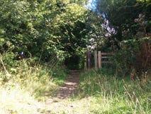 Wejście Forrest Fotografia Royalty Free