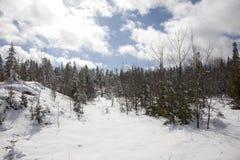 Wejście zima las Zdjęcie Royalty Free