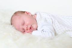 3-weken pasgeboren slaap Royalty-vrije Stock Afbeeldingen