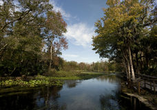 Wekiva Springs in Florida royalty free stock images
