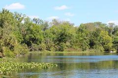 Wekiwa озера Стоковые Фото