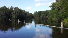 Wekiwa скачет парк штата Стоковые Изображения