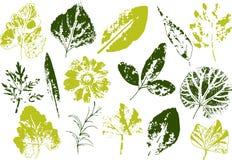 Wektorów liście i gałąź patroszonych elementów kwiecista ręka Rocznik monochromatyczna botaniczna ilustracja Znaczek czarni liści royalty ilustracja