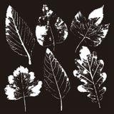 Wektorów liście i gałąź patroszonych element?w kwiecista r?ka Rocznik monochromatyczna botaniczna ilustracja royalty ilustracja