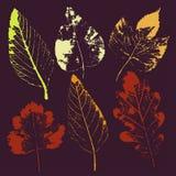 Wektorów liście i gałąź patroszonych element?w kwiecista r?ka Rocznik monochromatyczna botaniczna ilustracja ilustracji