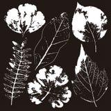 Wektorów liście i gałąź patroszonych element?w kwiecista r?ka Rocznik monochromatyczna botaniczna ilustracja ilustracja wektor