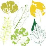 E patroszonych element?w kwiecista r?ka Rocznik monochromatyczna botaniczna ilustracja ilustracja wektor