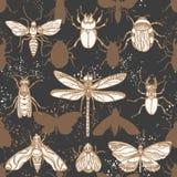 wektor bezszwowy wzoru Kształta insekt w nocy ilustracja wektor