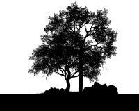 Wektor drzewa ilustracja wektor