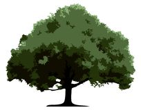 wektor drzewny Zdjęcie Stock