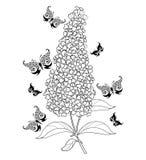 Wektor gałąź konturu okwitnięcie Buddleja lub motyliego krzaka kwiatu wiązka z liściem w czerni odizolowywającym na białym tle ilustracji