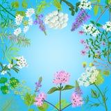 Wektor karta z ziołowymi kwiatami Fotografia Stock