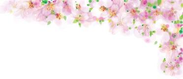 Wektor menchie, kwiecista granica, kwitnie Sakura drzewa, bokeh skutek ilustracja wektor
