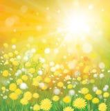 Wektor nieba tło z żółtymi dandelions. royalty ilustracja