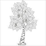 Wektor rysująca stylizowana brzoza zdjęcie royalty free