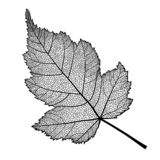Wektor szkieletował liść krzak na białym tle ilustracja wektor