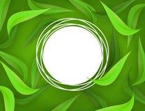 Wektor zieleni liści tła ramowy szablon Zdjęcie Stock