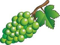 Wektor zielona wiązka winogrona - ilustracja Royalty Ilustracja