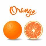 Wektorowa świeża bryła i dojrzała pomarańcze Zdjęcie Stock