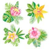 Wektorowa akwareli dżungli palma opuszcza kwiatu skład Obraz Stock
