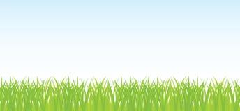 Wektorowa bezszwowa ilustracja zielona trawa Zdjęcia Royalty Free