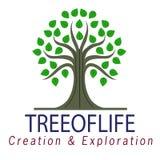 Wektorowa drzewna logo ilustracja odizolowywająca na białym tle zdjęcie royalty free