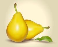 Wektorowa ilustracja świeża żółta bonkreta z zielonym liściem Fotografia Stock