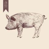 Wektorowa ilustracja świnia ręka patroszona ilustracyjny lelui czerwieni stylu rocznik Fotografia Stock