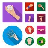 Wektorowa ilustracja animowana i kciuk ikona Kolekcja animowana i gest wektorowa ikona dla zapasu royalty ilustracja