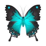 Wektorowa ilustracja błękitny motyl ilustracja wektor