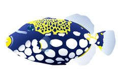 Wektorowa ilustracja barwiona ryba triggerfish ilustracji