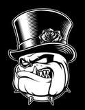 Wektorowa ilustracja buldog z kapeluszem na ciemnym tle royalty ilustracja