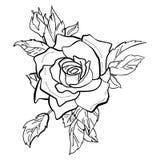 Wektorowa ilustracja czerwieni róża Obraz Royalty Free