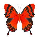 Wektorowa ilustracja czerwony motyl ilustracji
