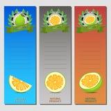 Wektorowa ilustracja dla dojrzałego owoc zieleni pomelo ilustracji