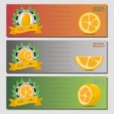 Wektorowa ilustracja dla dojrzałego owocowego żółtego kumquat royalty ilustracja