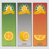 Wektorowa ilustracja dla dojrzałego owocowego żółtego kumquat ilustracji