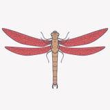 Wektorowa ilustracja dragonfly Zdjęcie Royalty Free