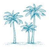 Wektorowa ilustracja drzewka palmowe Obrazy Royalty Free