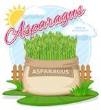 Wektorowa ilustracja eco produkty Asparagus w burlap worku Pełni worki z świeżymi warzywami Fotografia Royalty Free