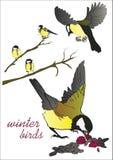 Wektorowa ilustracja kilka zima ptaki siedzi na gałąź Zdjęcie Royalty Free