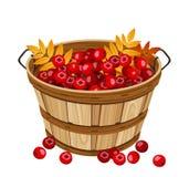 Wektorowa ilustracja kosz z rowan jagodami. Obraz Stock