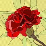 Wektorowa ilustracja kwiat czerwieni goździk. Ilustracji