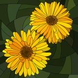 Wektorowa ilustracja kwiatu kolor żółty calendula. Ilustracji
