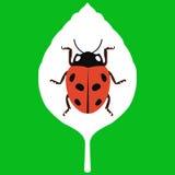 Wektorowa ilustracja liść na zielonym tle Ilustracja Wektor