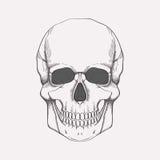 Wektorowa ilustracja ludzka czaszka Fotografia Stock