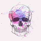Wektorowa ilustracja ludzka czaszka z akwareli pluśnięciem Zdjęcia Royalty Free