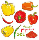 Wektorowa ilustracja pieprze, chili pieprze, Cayenne i pikantność, Obrazy Royalty Free
