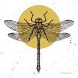 Wektorowa ilustracja ręka rysujący dragonfly Roczników insektów nakreślenia kolekcja Wiosna projekta szablon ilustracji